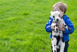 Lamb Cuddles - a child with a lamb