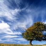 """""""Lonely Tree on Top of a Hill With Strong Wind Blowing"""", Creator: Ulrich Mueller, 123rf.com"""