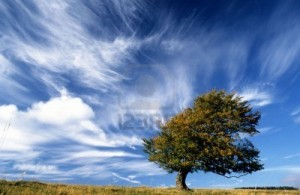 """Lonely Tree on Top of a Hill With Strong Wind Blowing"", Creator: Ulrich Mueller, 123rf.com"