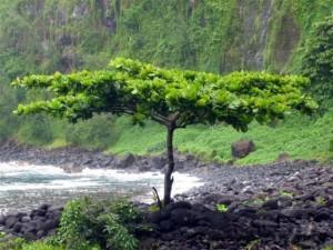 """Almond Tree"", Creator: Unknown, inriodulce.com"
