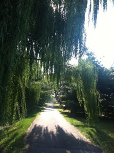 On the Mount Vernon trail
