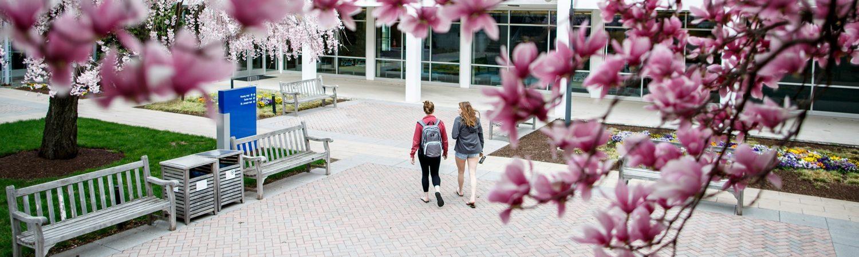The Student Academic Hub Newsletter