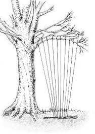 aeolian harp coleridge