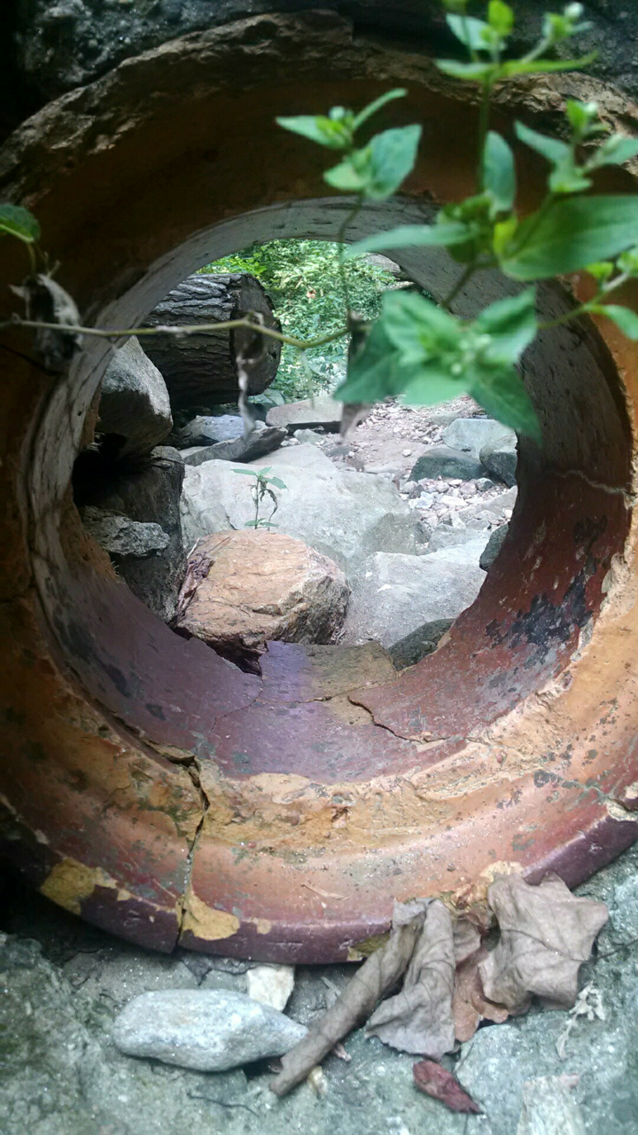 Rusted pipe surrounded by overgrowth.