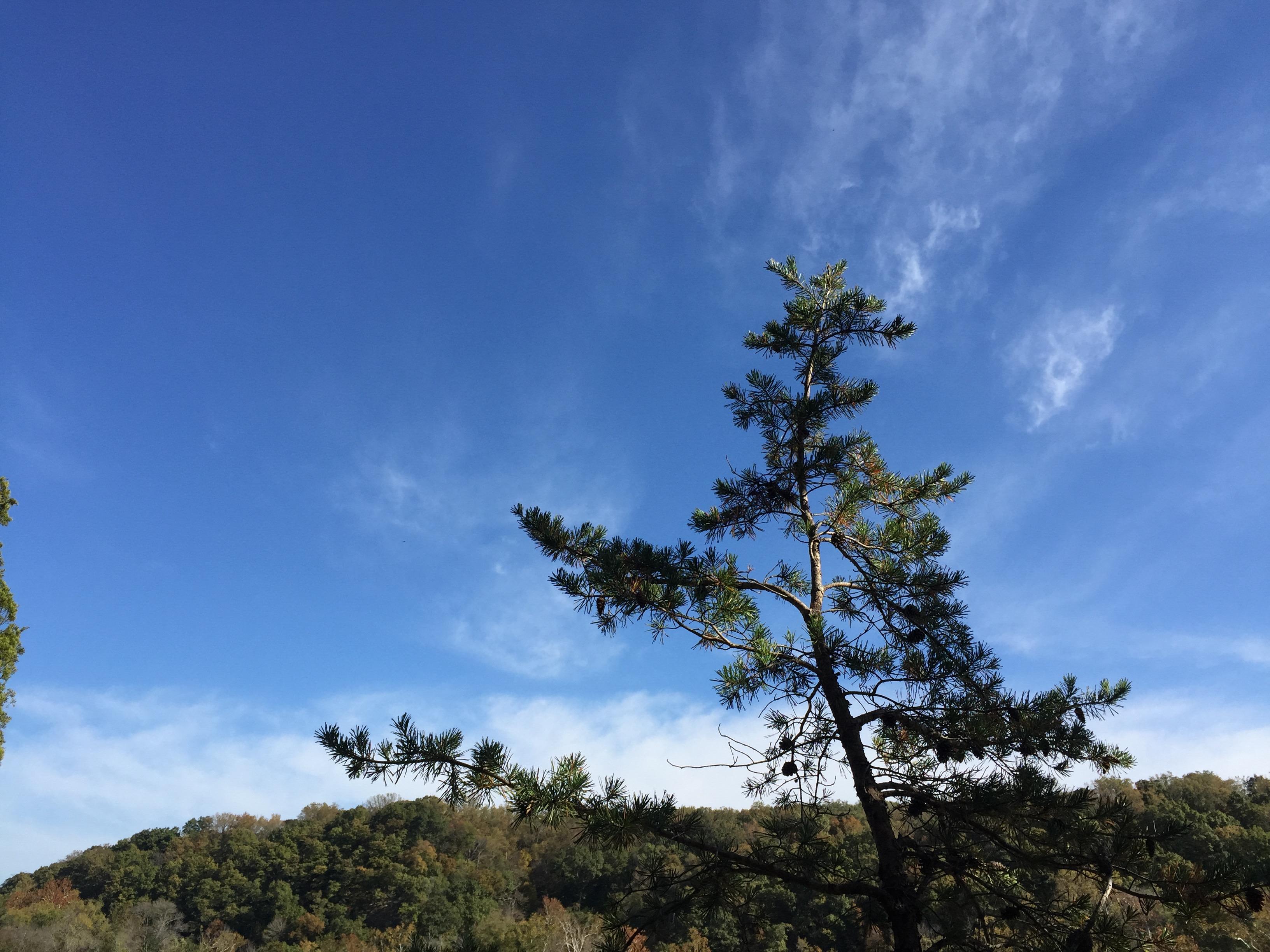 2/3 sky